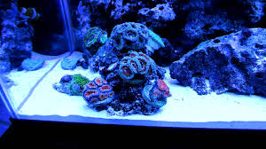Reef Aquarium Lighting Part 2 In Hd My 29 Gallon Marine Salt Water Aquarium Coral Reef