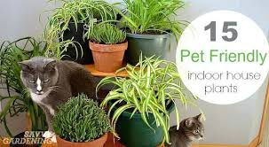 small low light plants small indoor house plants pet friendly house plants flowering indoor