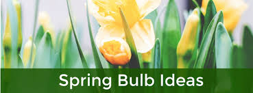 spring ideas spring blooming bulb ideas evergreen of johnson city tn