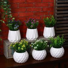 Good Desk Plants Indoor Plants Nz Exotic Ficus Bonsai Plant Plants Store Buy