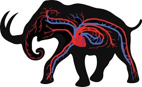 resurrect mammoth sooner huffpost