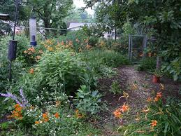 midwest native plants a suburban jungle ohio birds and biodiversity