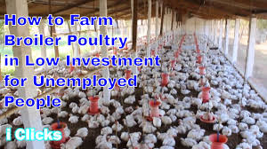 2017 how to starts latest broiler poultry chicken simple very