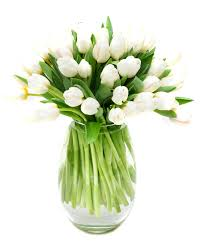 weekly flower delivery weekly flower delivery tulips white