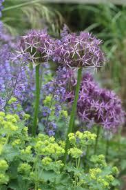 452 best plant combinations 2 images on pinterest plants garden