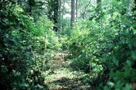 Alabama vegetaion images Natural resources wildlife managing natural vegetation jpg