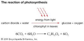 Light Independent Reactions Definition Photosynthesis Importance Process U0026 Reactions Britannica Com