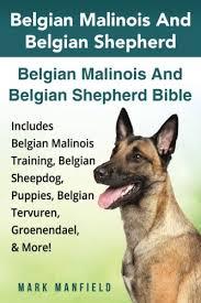 belgian sheepdog puppy cost belgian malinois and belgian shepherd belgian malinois and