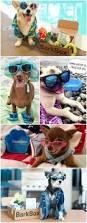 11 bluetick coonhound puppies in a bathtub 418 best animal lover images on pinterest animals golden