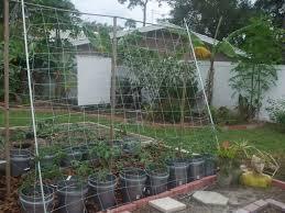 image of trellis netting lowes dalen trellis netting 5x15
