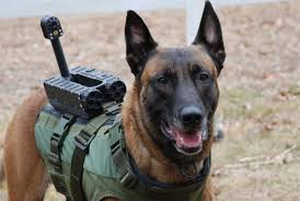 belgian sheepdog anesthesia virtual armor technology for canine life safety page 2