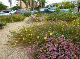 plants comprehensive socalnativescapes photos