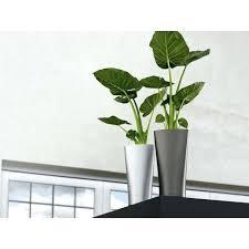 Indoor Container Gardening - indoor plant containers u2013 eatatjacknjills com