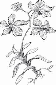 orchid coloring pages u0026 pictures imagixs line art painting