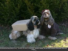 Halloween Costume Ideas Dogs Clever Ideas Dog Halloween Costumes Fidose Reality