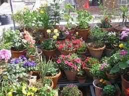 Ideas For Terrace Garden Mesmerizing Ideas For Terrace Garden Pictures Best Idea Home Ideas