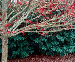 Backyard Trees For Shade - selecting trees for your yard