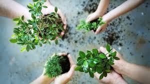 spring garden family practice jackson county master gardener association u2013 your rogue valley