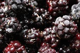 there are worms in the blackberries you just picked kuow news