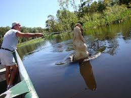 Louisiana travel tours images 31 best honey island swamp tours images tours jpg