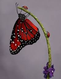 untitled butterflies are fairies in disguise