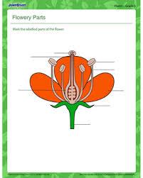 flowery plants u2013 free plant worksheet for middle u2013 jumpstart