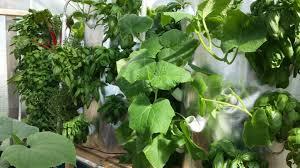 Verticle Gardening by Art Garden