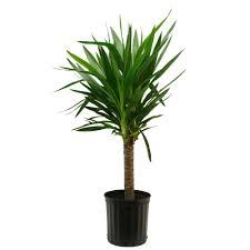 best indoor house plant best of best indoor hanging house plants