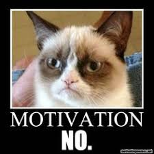 Frowning Meme - grumpy cat working out with frowning lol cats pinterest