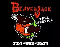 pittsburgh tree services allegheny and butler county tree service