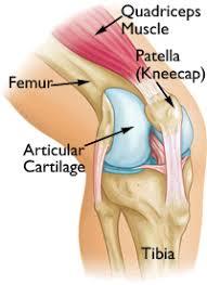 Back Knee Anatomy Distal Femur Thighbone Fractures Of The Knee Orthoinfo Aaos