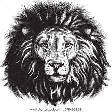 black white vector sketch majestic lions stock vector 178466258