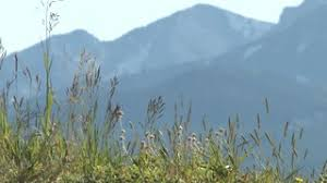 mountain backdrop colorado grass with mountain backdrop 4 stock footage