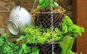 Herb Container Garden - container herb garden hometalk