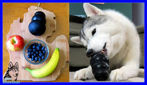 Diy Dog And Cat Treats by Diy Dog Treats Frozen Fruit Salad Kongs Snow Dogs Snacks 48
