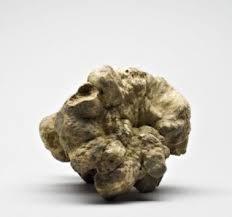 Where To Buy Truffles Online Buy Truffles Online Fresh Truffles Gold Istra Truffle Products