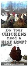 351 best raising chickens farm animals images on pinterest