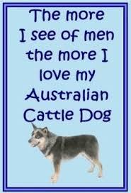 australian shepherd ebay matthew mcconaughey blue heelers pinterest matthew