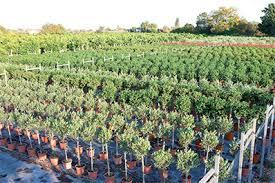 galano vivers nursery ornamental plants for gardening