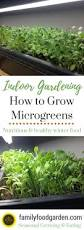 growing indoor microgreens more gardens ideas