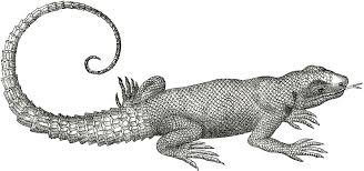 lizard images free free download clip art free clip art on