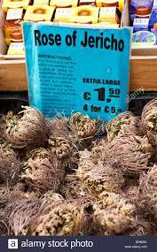 of jericho flower bulbs on sale at amsterdam flower market