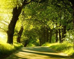 Forest Green by Trees Road Forest Green Hd Wallpaper Nature And Landscape