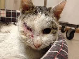Famosos Conheça Pirata, gato sem um olho resgatado das ruas &GU95
