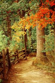 Fall Autumn by 1268 Best Can U0027t Wait For Fall Images On Pinterest Fall Autumn