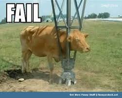 Funny Cow Memes - funny cow memes google search animals pinterest funny cows