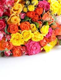 different color roses different color roses yellow pink may be used as the