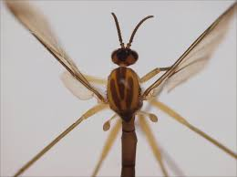 loving insect named after tuomas holopainen of nightwish