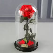 rose in glass preserved romantic single enchanted rose flower in glass vase