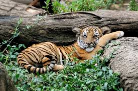 Botanical Garden Cincinnati Cincinnati Zoo And Botanical Garden Cincinnati Attractions Review